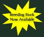 Breeding Stock